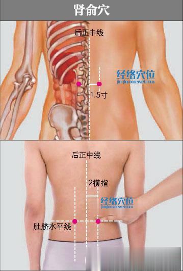 肾俞穴的准确位置图