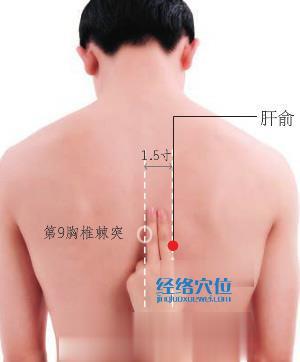 肝俞穴的准确位置图
