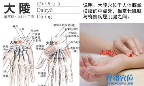 (原创)人体穴位一胳膊手部(9)大陵穴