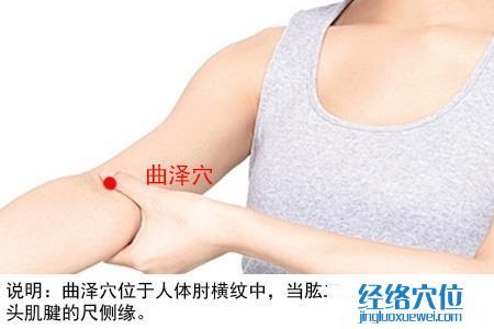(原创)人体穴位一胳膊手部(10)曲泽穴