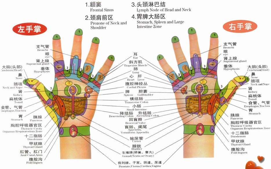 手部反射区图(左手掌、右手掌)
