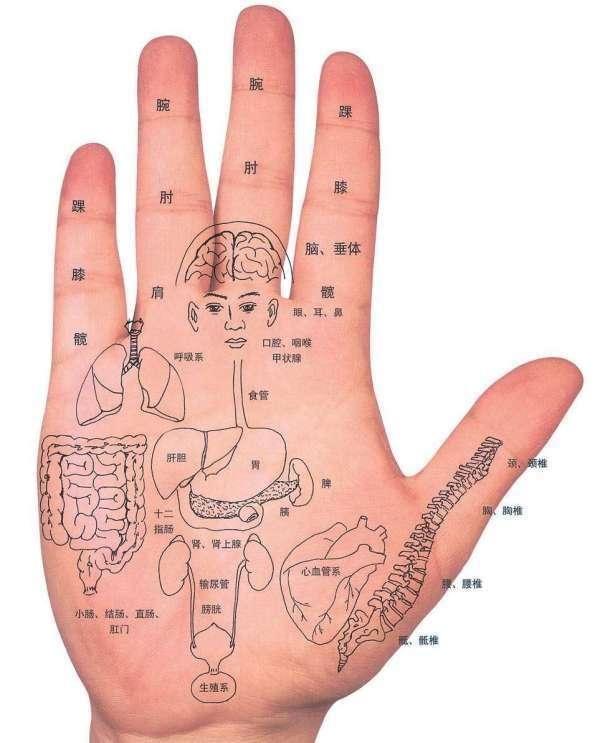 手的反射区图高清图解