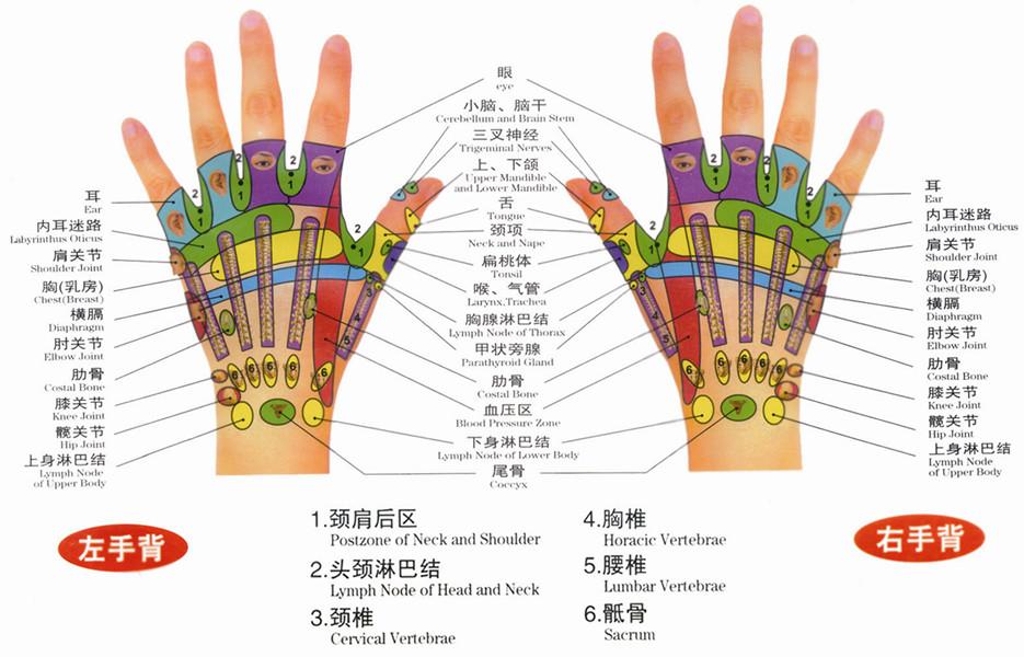 手部反射区图(左手背、右手背)