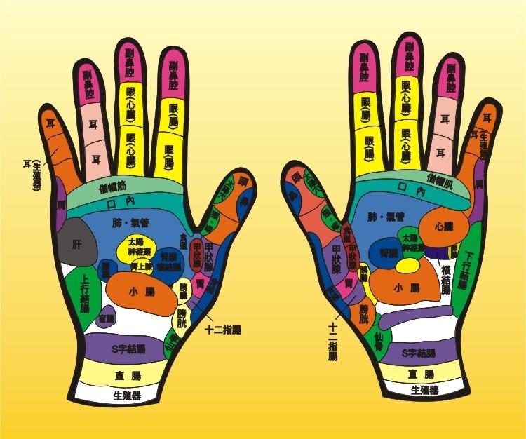 人体手部反射区高清图