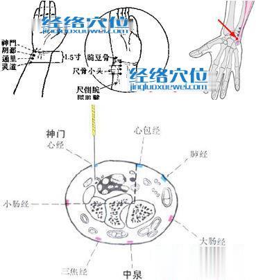 神门穴解剖图