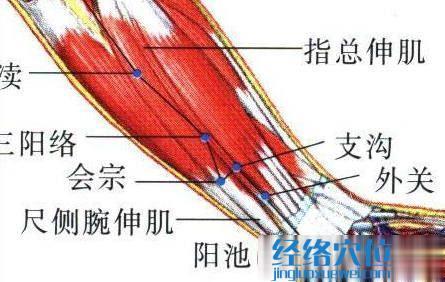 外关穴的位置解剖分析图