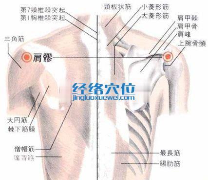 肩髎穴的位置解剖分析图