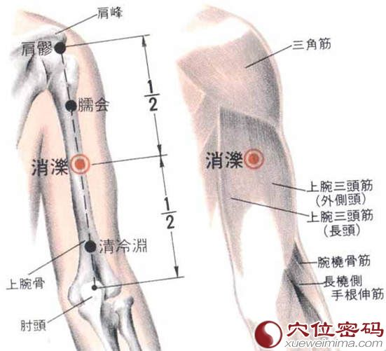 消泺穴位置解剖分析图