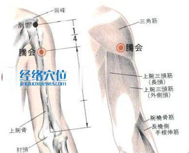 臑会穴的位置解剖分析图
