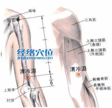 清冷渊穴的位置解剖分析图