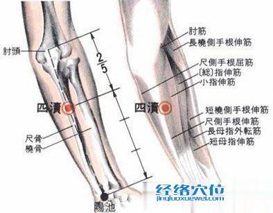 四渎穴的位置解剖分析图片