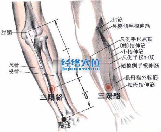 三阳络穴的位置解剖分析图