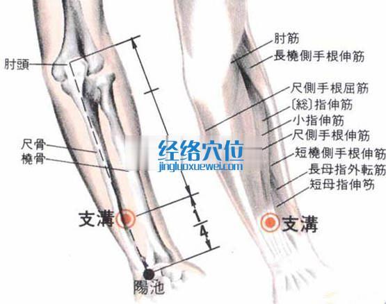 支沟穴的位置解剖分析图