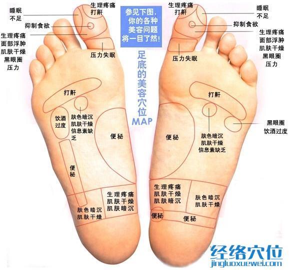 脚底反射区之足底按摩 美容穴位