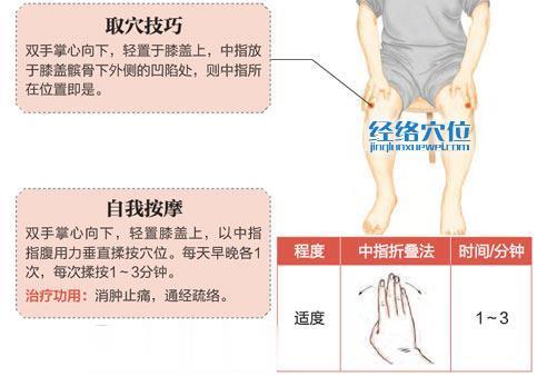 犊鼻穴的准确位置图