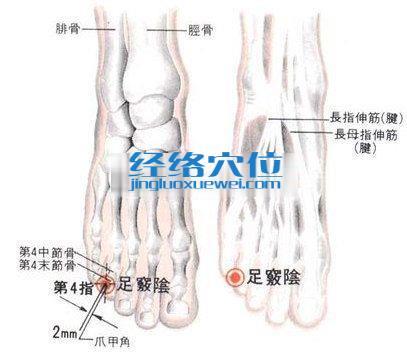 足窍阴穴的位置解剖分析图