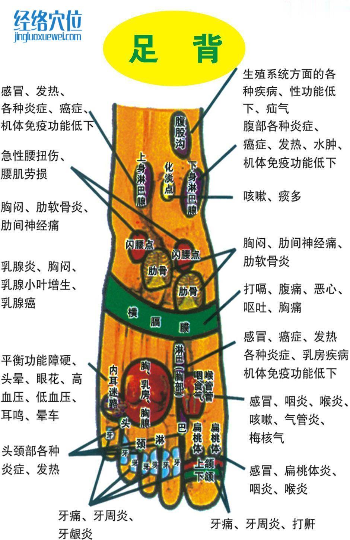 足部反射区图(足背)