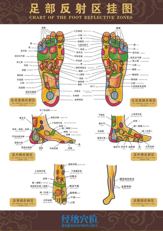 脚底跖骨结构图