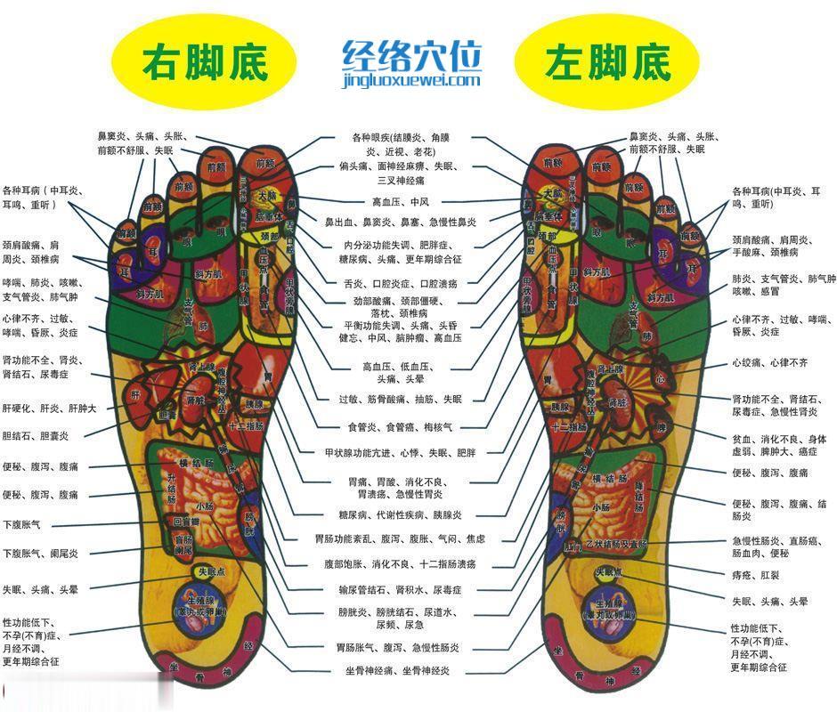 脚底反射区图