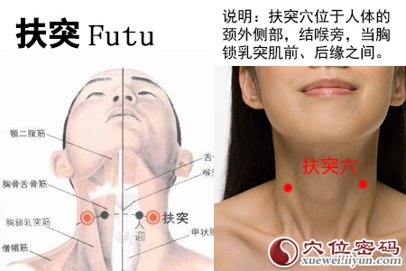 (原创)人体穴位一颈部肩部(15)扶突穴