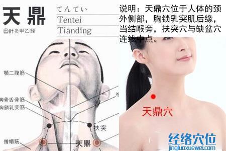 (原创)人体穴位一颈部肩部(16)天鼎穴