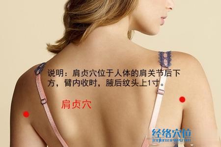(原创)人体穴位一颈部肩部(14)肩贞穴