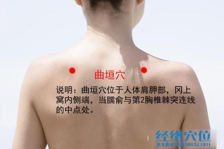 (原创)人体穴位一颈部肩部(11)曲垣穴