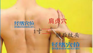 肩贞穴的准确位置图