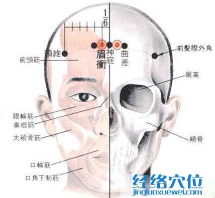 眉冲穴的解剖分析图