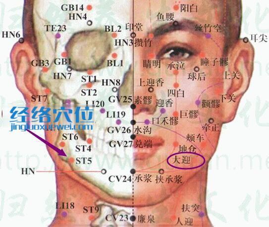 大迎穴的准确位置及解剖分析图