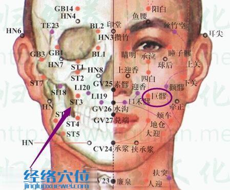 巨髎穴的位置解剖分析图