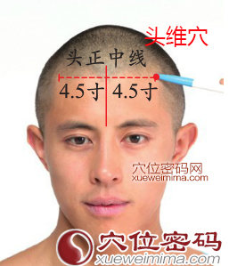头维穴位位置图