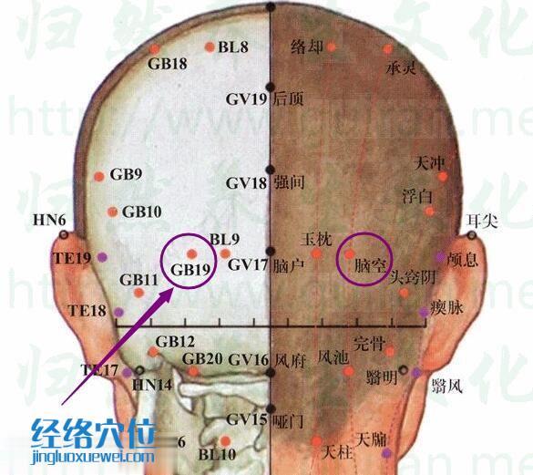 脑空穴位置位置图