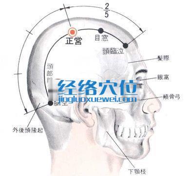 正营穴的位置解剖分析图