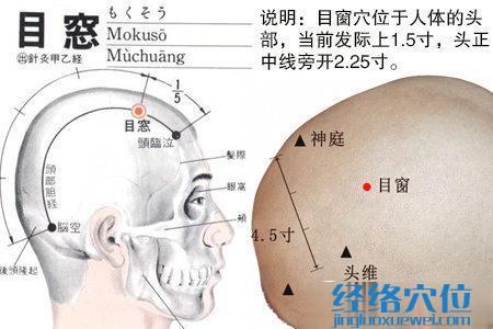 目窗穴的位置解剖分析图