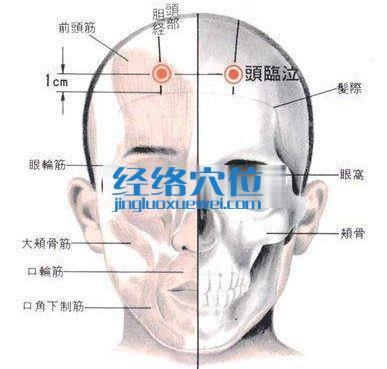 头临泣穴的位置解剖分析图