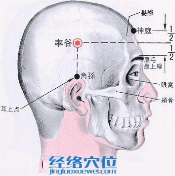 率谷穴的位置解剖分析图