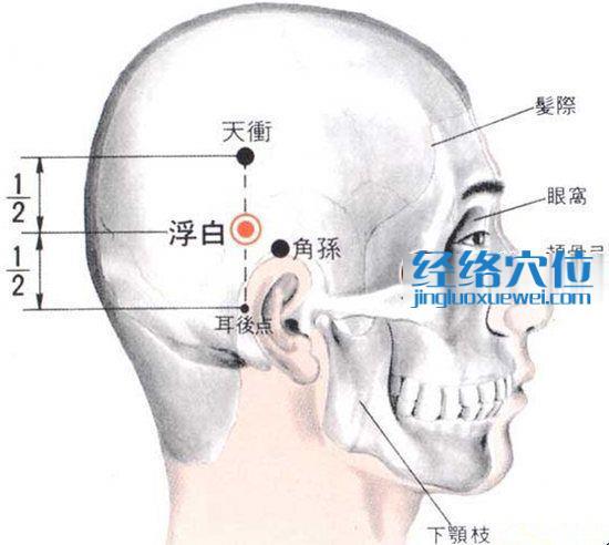 浮白穴的位置解剖分析图