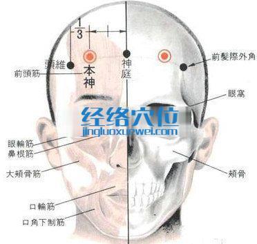 本神穴的位置解剖分析图