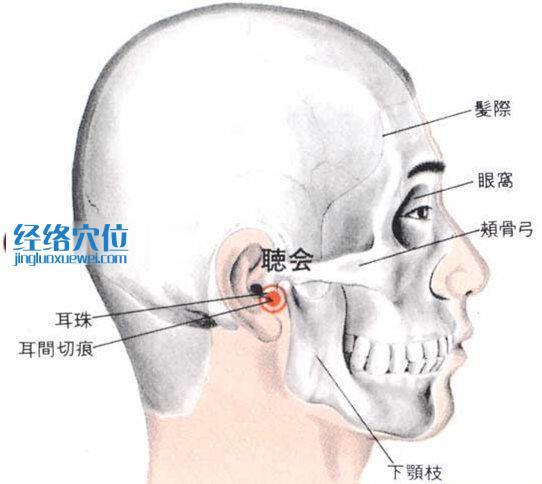 听会穴的位置解剖分析图