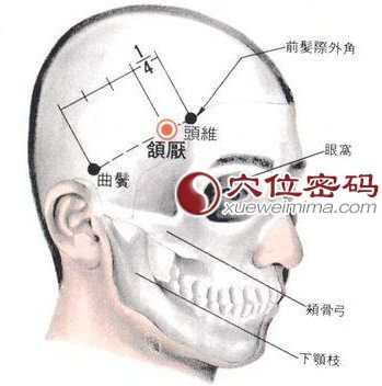 颔厌穴的位置解剖分析图
