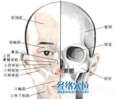 素髎穴的位置解剖分析图