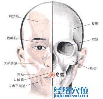 兑端穴位的位置解剖分析图