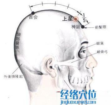 上星穴的位置解剖分析图