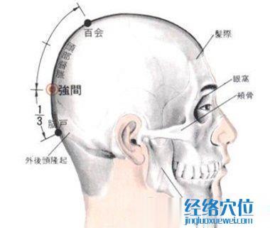 强间穴的位置解剖分析图