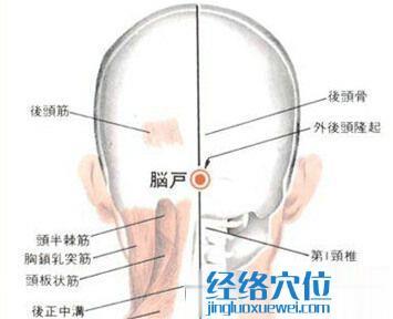 脑户穴的位置解剖分析图