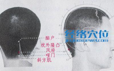 风府穴的位置解剖分析图