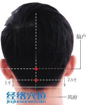 脑户穴位位置图