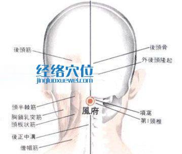 哑门穴的位置解剖分析图