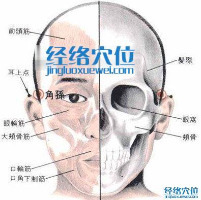 角孙穴的位置解剖分析图
